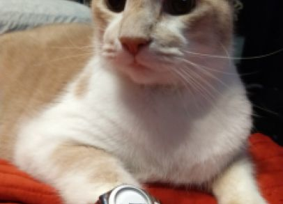 Not only does this cat have impeccable taste in watches...